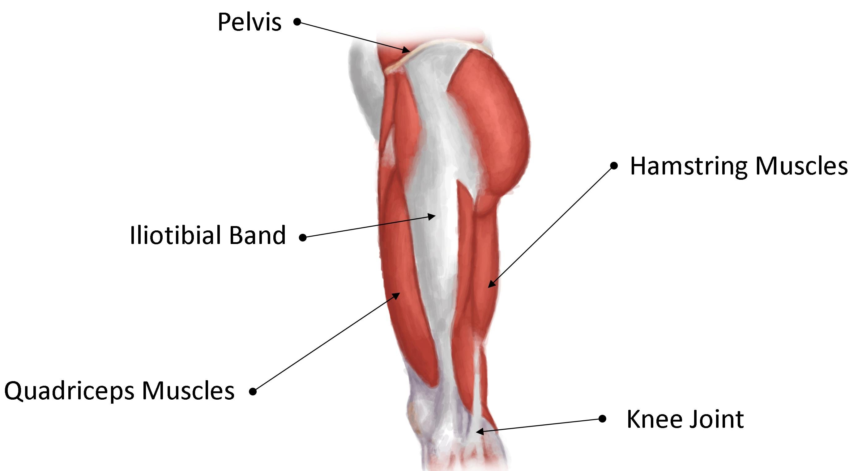 It band anatomy at knee 1840828 - follow4more.info